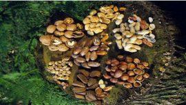أنواع من المكسرات تحمي الجسم وتحسن الحالة الصحية