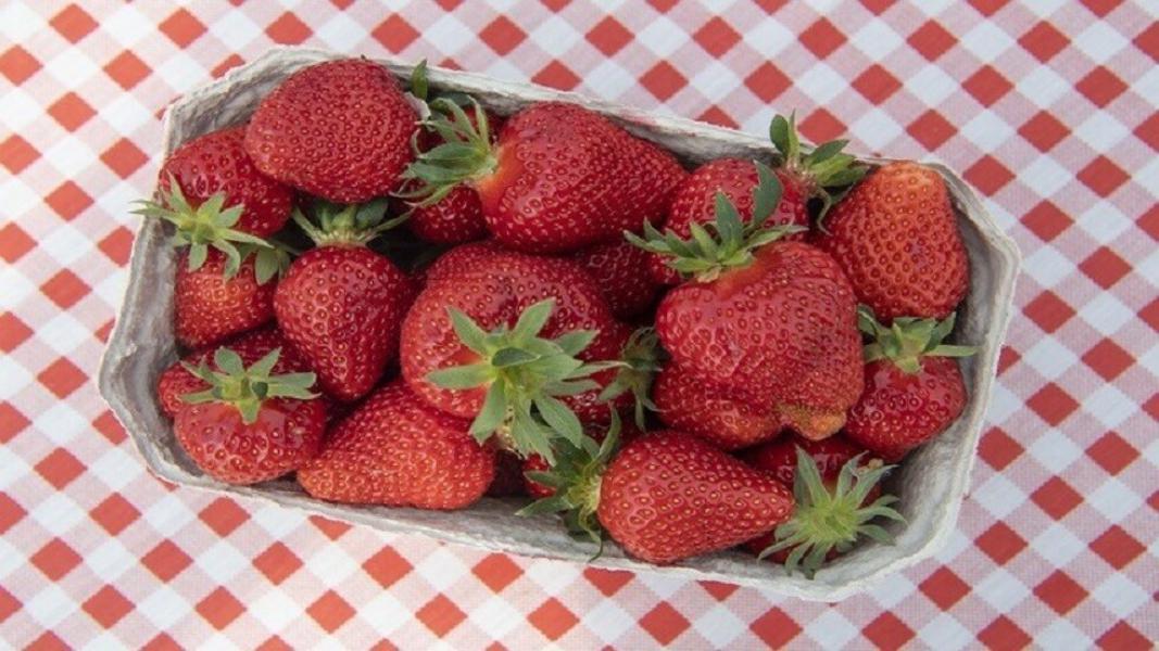 خبيرة التغذية الروسية:الفراولة ليست مفيدة للجميع